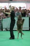 A dancing dog at an event in Ireland