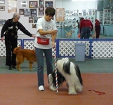 A handler and her dog at one of Richards workshops in the USA